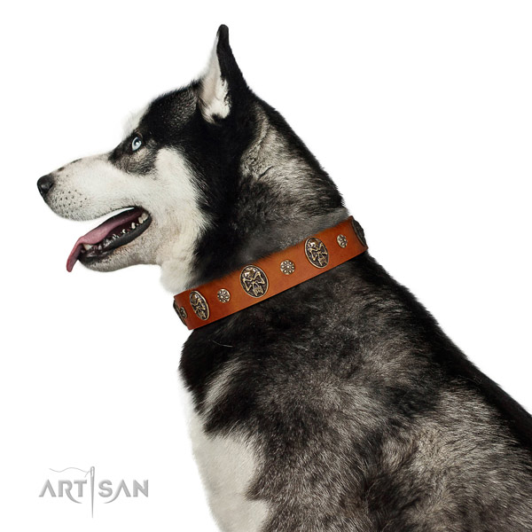 Comfortable wearing dog collar of natural leather with exceptional adornments