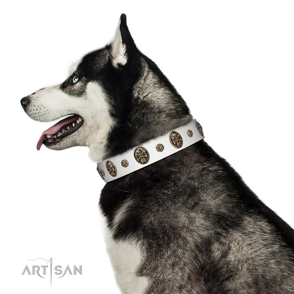 Comfortable wearing dog collar of genuine leather with remarkable adornments