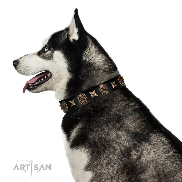 Easy wearing dog collar of leather with impressive studs