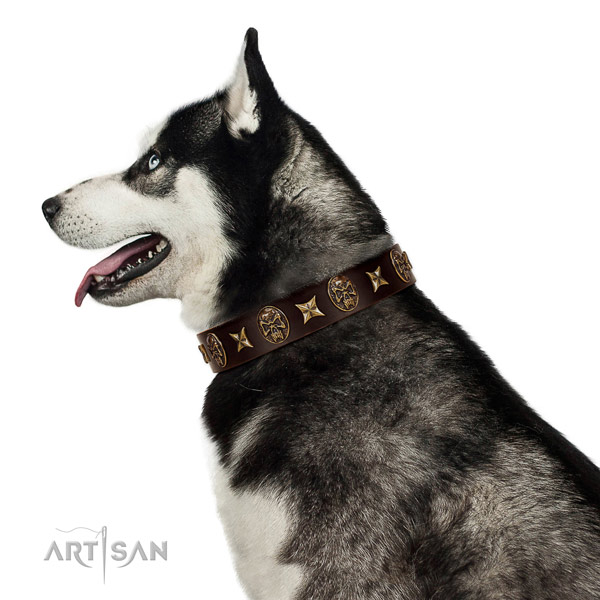 Everyday walking dog collar of natural leather with impressive adornments