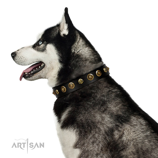 Reliable leather dog collar with studs for your four-legged friend
