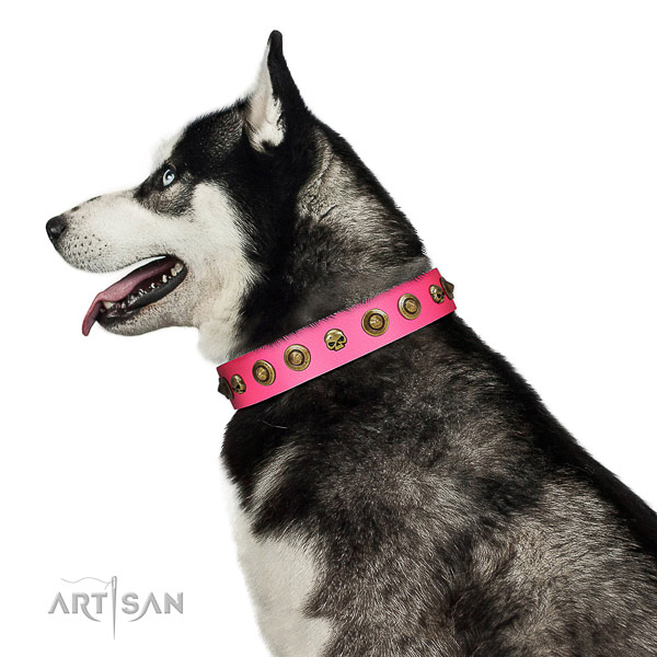 Unique genuine leather dog collar with studs