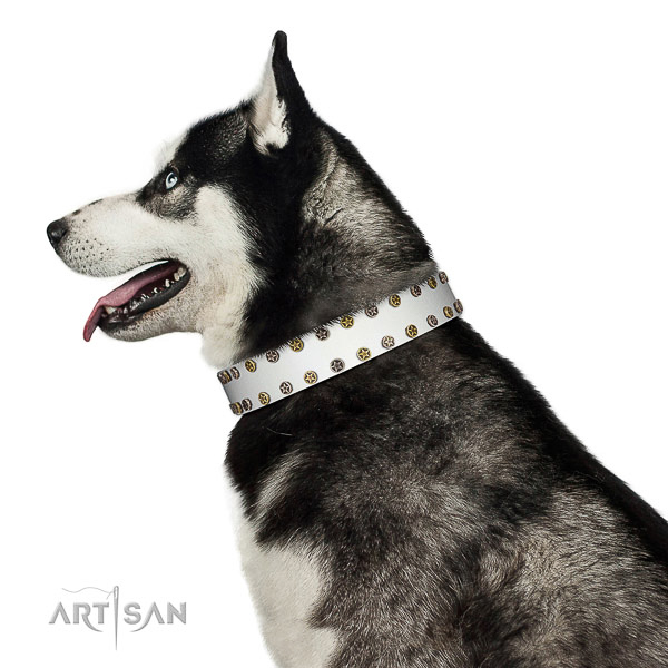 Significant full grain leather dog collar with strong embellishments