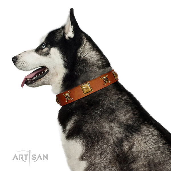 Fashionable leather dog collar with reliable decorations