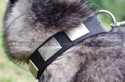 Husky designer collar with massive plates