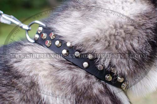 Husky designer collar with silver-like studs