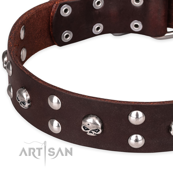 Day-to-day leather dog collar with astonishing studs