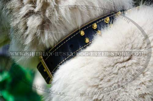 Leather dog collar for Husky stitched and riveted
