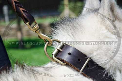 Leather dog collar for Husky with nickel plated hardware