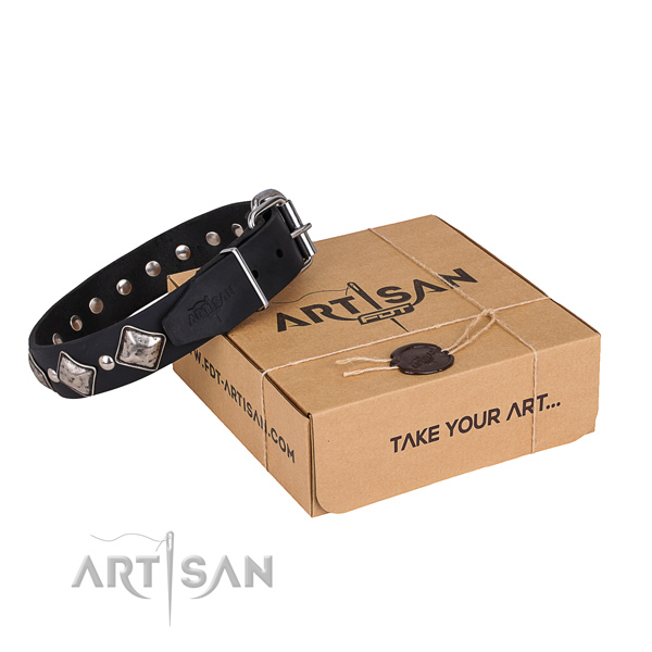 Casual leather dog collar with astounding embellishments