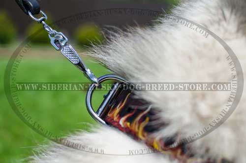 Durable nickel plated fittings of leather Siberian Husky collar