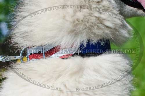 Painted collar for Siberian Husky american pride