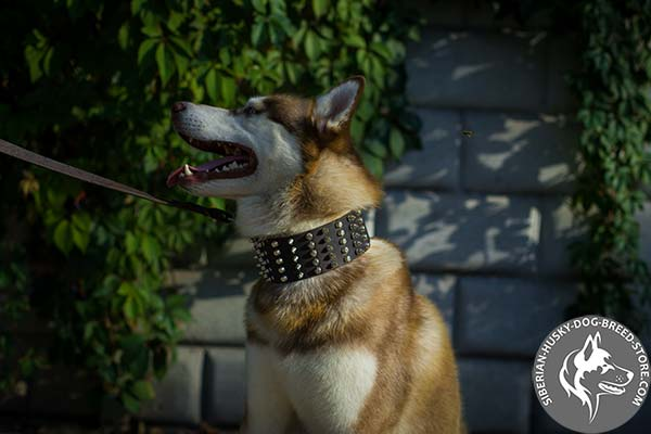 Leather dog collar with 5 rows of spikes and studs