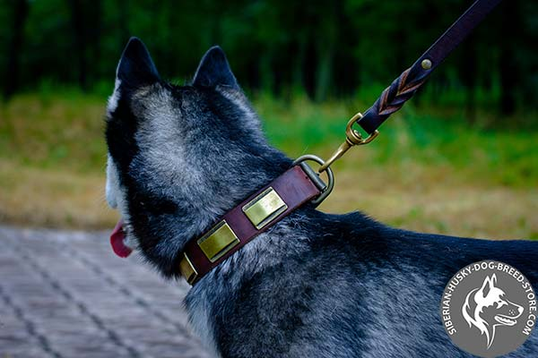 Leather dog collar adorned with brass plates
