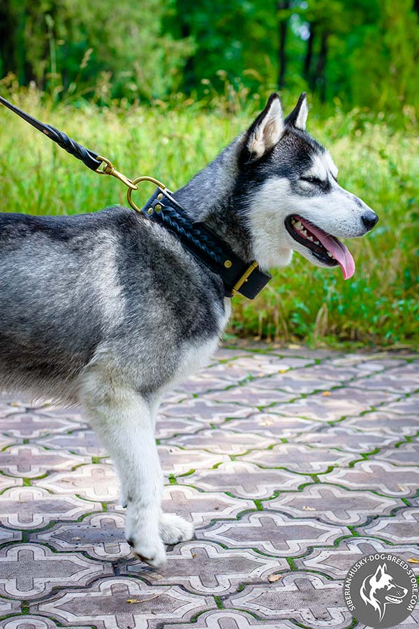 Siberian Husky collar with braided decoration