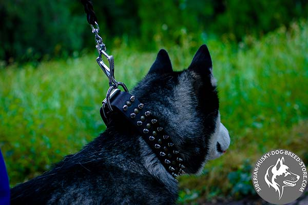 Siberian Husky collar with corrosion resistant nickel fittings