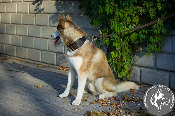 Good-looking Siberian Husky genuine leather collar