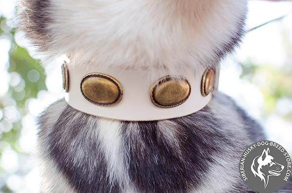 Siberian Husky leather collar with handset brass ovals