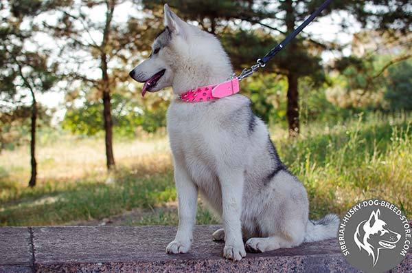 Siberian Husky health-friendly leather collar
