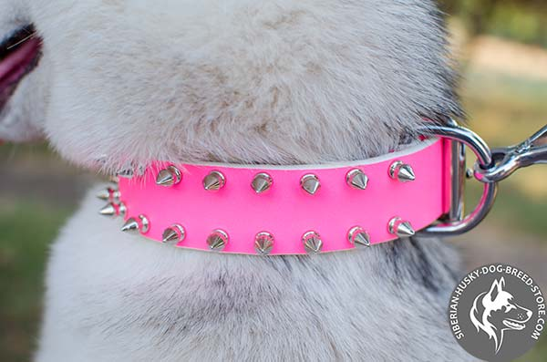Siberian Husky leather collar with 2 rows of manually set spikes