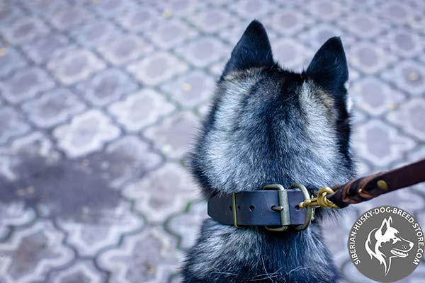Siberian Husky genuine leather collar with reliable buckle