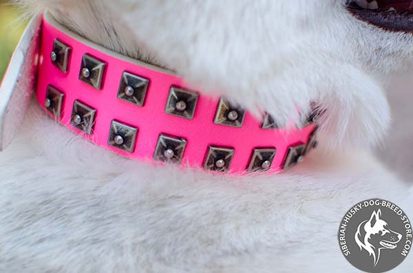 Siberian Husky collar with riveted studs