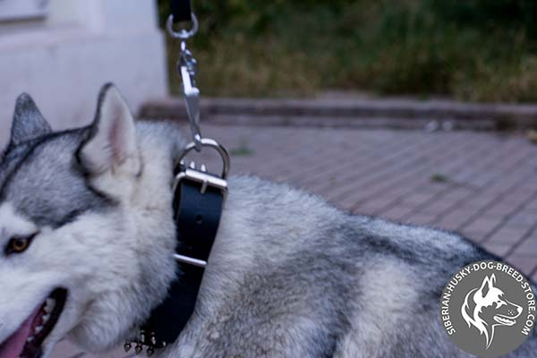 Siberian Husky strong leather collar with rust-free hardware