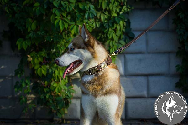 Leather dog collar with stunning decorations