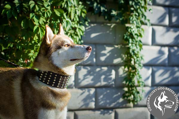 Leather dog collar for walking in style