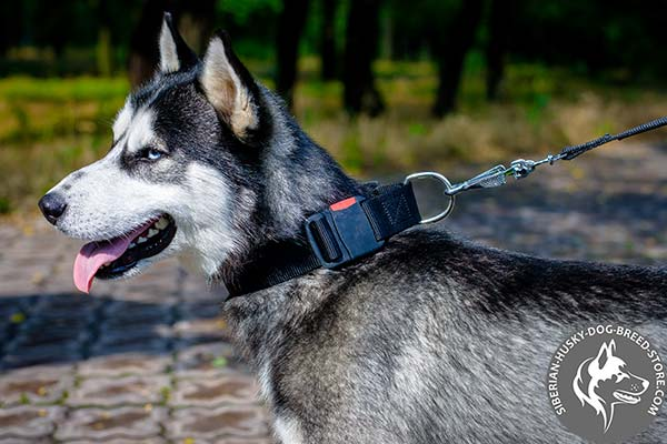 Siberian Husky long-lasting nylon collar for quick handling