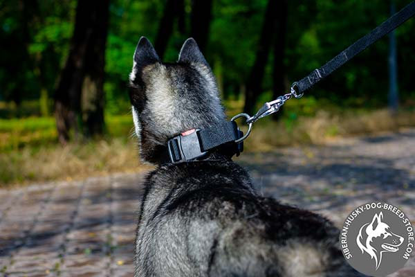Quick-to-adjust Siberian Husky collar