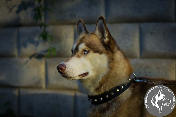 Wear-resistant nylon collar for Siberian Husky