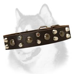 Siberian Husky breed leather collar with pyramids and  studs