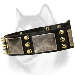 Siberian Husky breed leather dog collar gladiator style
