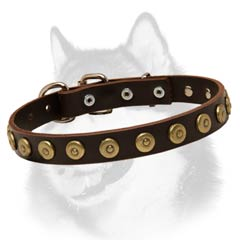 Siberian Husky breed leather dog collar with brass circles