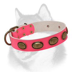 Adorned leather Siberian Husky collar for walking