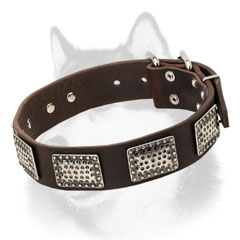 Leather Siberian Husky collar with massive plates