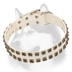 Studded white dog collar for Siberian Husky