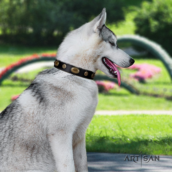 Siberian Husky unusual decorated full grain genuine leather dog collar for stylish walking