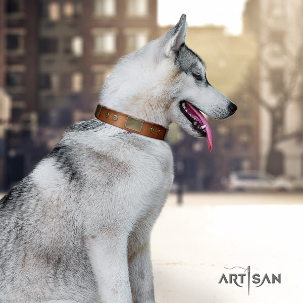 Siberian Husky exquisite embellished full grain genuine leather dog collar