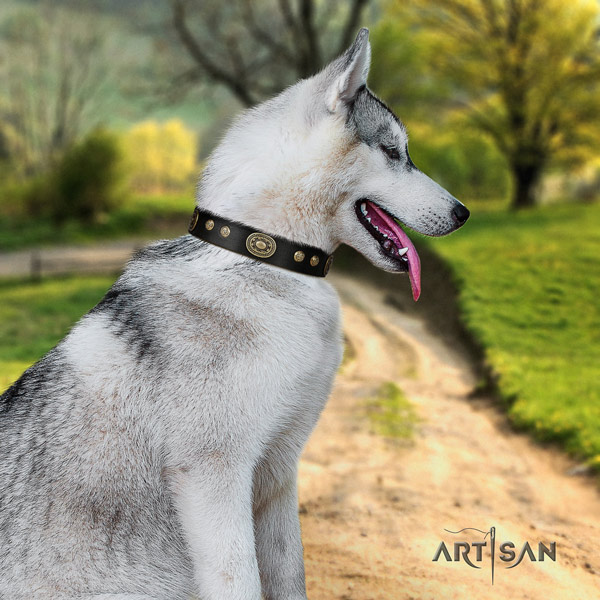 Siberian Husky inimitable adorned full grain natural leather dog collar
