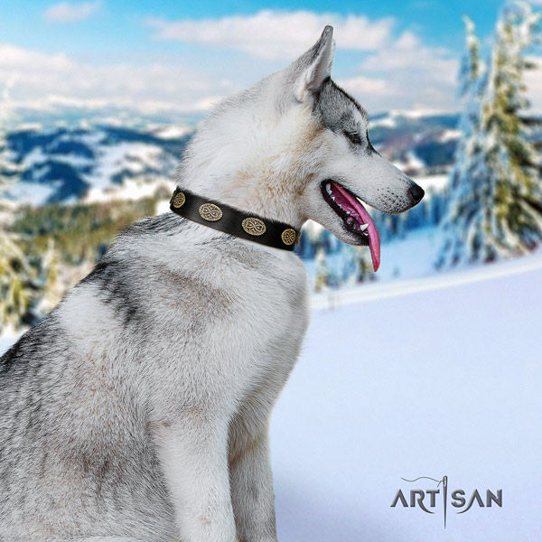 Siberian Husky extraordinary studded natural genuine leather dog collar