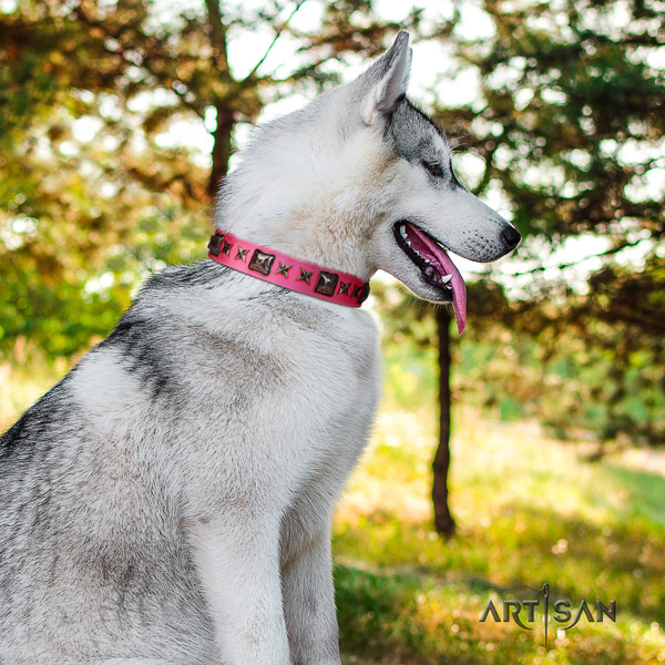 Siberian Husky significant studded full grain genuine leather dog collar