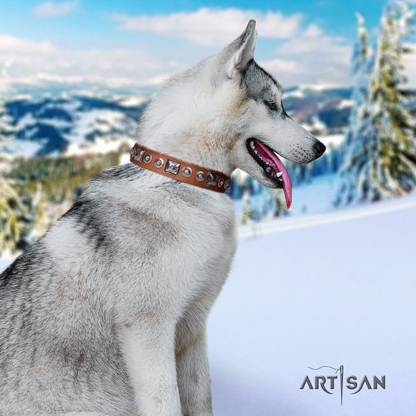 Siberian Husky incredible embellished full grain genuine leather dog collar