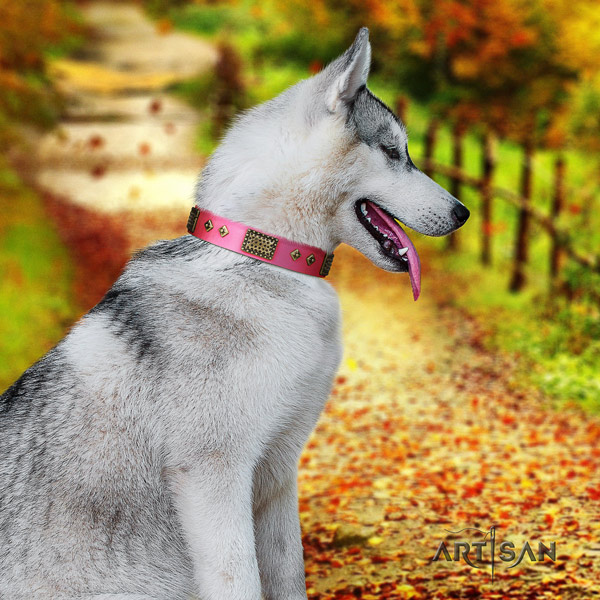 Siberian Husky trendy embellished full grain natural leather dog collar