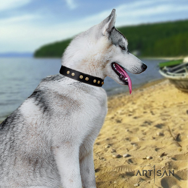 Siberian Husky trendy adorned full grain genuine leather dog collar