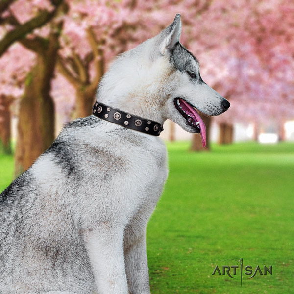 Siberian Husky exquisite decorated full grain genuine leather dog collar