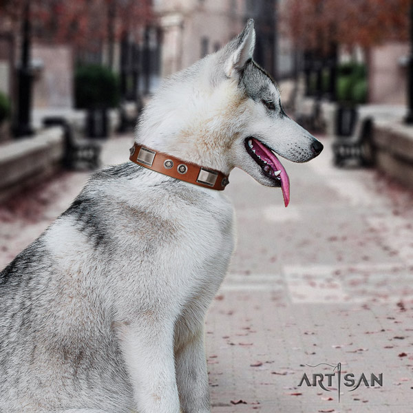 Siberian Husky exceptional adorned full grain natural leather dog collar for everyday use