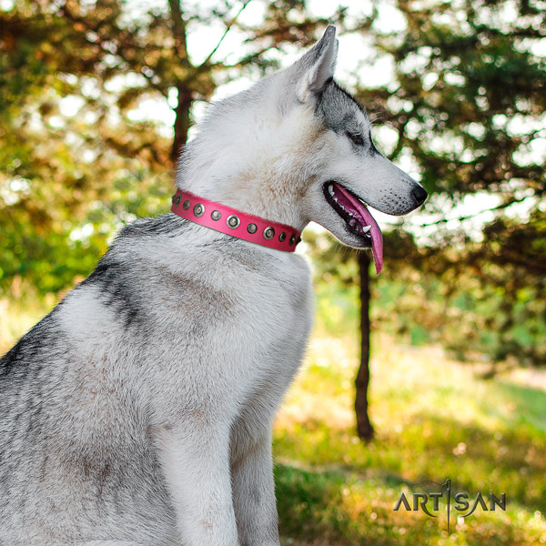 Siberian Husky extraordinary embellished natural leather dog collar for easy wearing