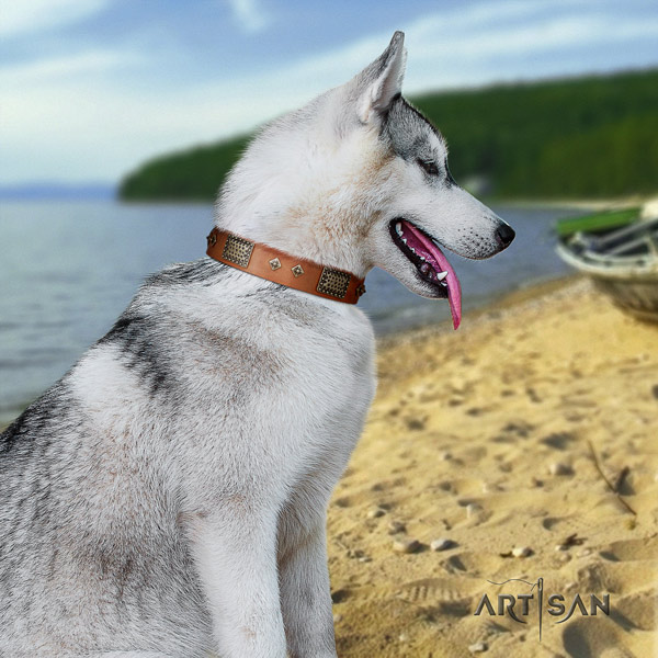 Siberian Husky stylish adorned full grain genuine leather dog collar